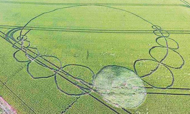 2016 Circles: Danebury Ring, Nr Andover