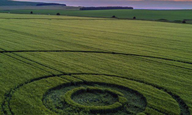 2018 Season: Baltic Farm, Bishops Cannings Down, Wiltshire