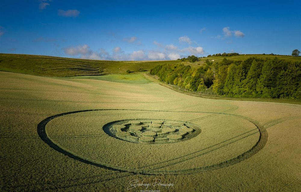 2020 Circles: Easton Clump, Nr Easton Royal, Wiltshire