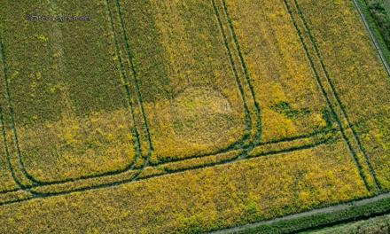 2020 Circles: Marden Copse, Chirton Bottom, nr Urchfont, Wiltshire