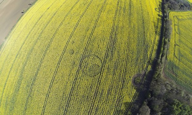 2017 Circles: Tarlton Down, Gloucestershire