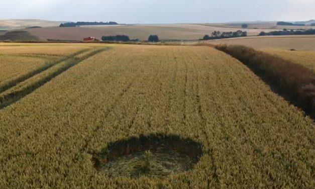 2018 Circles: Waden Hill (2), Avebury, Wiltshire