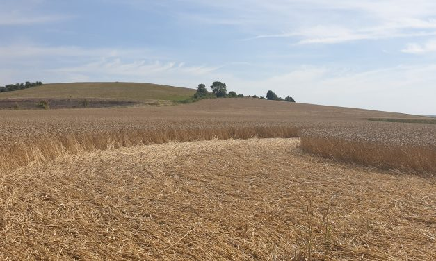 Books: The Energies of Crop Circles — The Science and Power of a Mysterious Intelligence