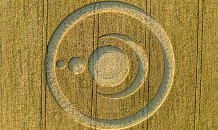 2019 Circles: Clear Wood, Warminster, Wiltshire