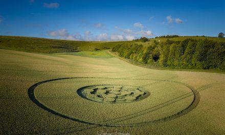 2020 Circles: Easton Clump, Nr Easton Royal, Wiltshire