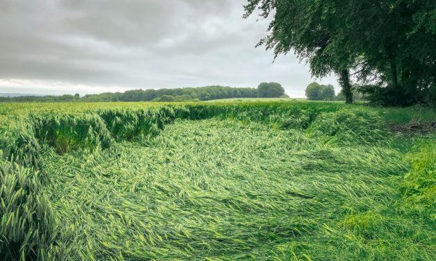 Dear Croppie: Irregular Crop Circles