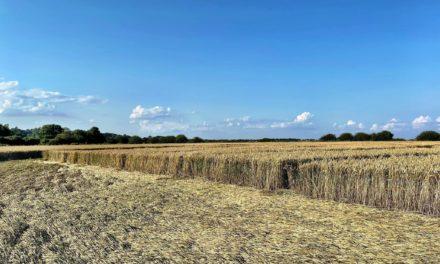 2021 Circles: Nuns Walk, Tufton Groundshots